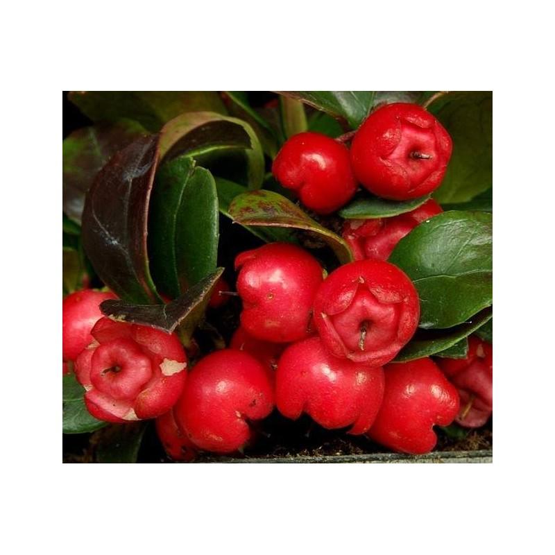 http://dogaaktar.com/1663-thickbox_default/agromax-masaj-kremi-keklik-uzumu-yagi-organik-bitkisel.jpg
