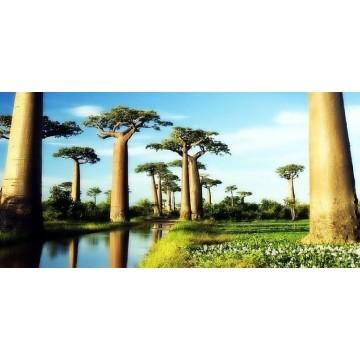 Baobab yağ-Çılgın Gece Serumu-Derya Baykal-Hande Polat