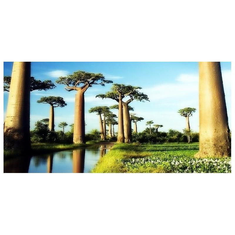http://dogaaktar.com/2071-thickbox_default/baobab-yag-cilgin-gece-serumu-derya-baykal-hande-polat-.jpg